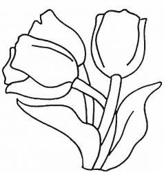 plansa de colorat flori lalele de colorat p02