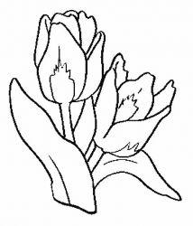 plansa de colorat flori lalele de colorat p03