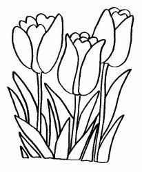 plansa de colorat flori lalele de colorat p07