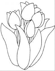 plansa de colorat flori lalele de colorat p11