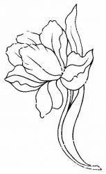 plansa de colorat flori lalele de colorat p18