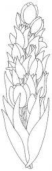 plansa de colorat flori lalele de colorat p22