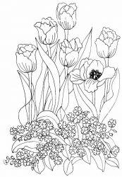 plansa de colorat flori lalele de colorat p26