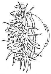 plansa de colorat flori lavanda de colorat p01
