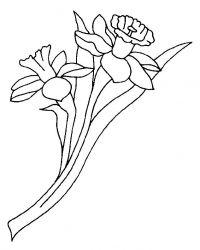 plansa de colorat flori narcise de colorat p01