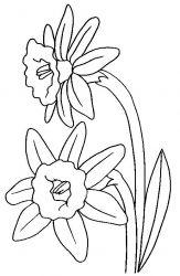 plansa de colorat flori narcise de colorat p05
