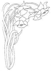 plansa de colorat flori narcise de colorat p06
