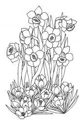 plansa de colorat flori narcise de colorat p07
