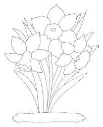 plansa de colorat flori narcise de colorat p08