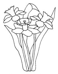 plansa de colorat flori narcise de colorat p10
