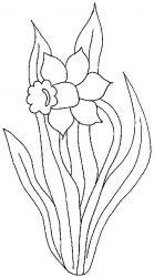 plansa de colorat flori narcise de colorat p11