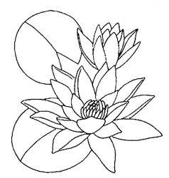 plansa de colorat flori nuferi de colorat p02