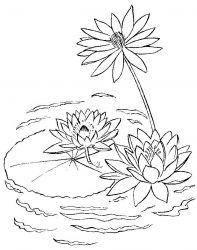 plansa de colorat flori nuferi de colorat p04