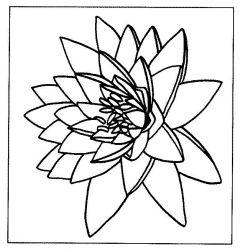plansa de colorat flori nuferi de colorat p06
