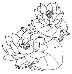 plansa de colorat flori nuferi de colorat p10