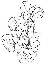 plansa de colorat flori nuferi de colorat p12
