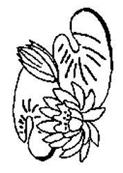 plansa de colorat flori nuferi de colorat p18