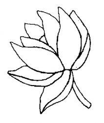 plansa de colorat flori nuferi de colorat p21