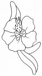 plansa de colorat flori orhidee de colorat p01