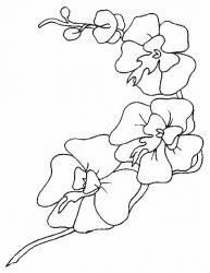 plansa de colorat flori orhidee de colorat p02