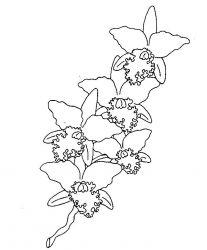 plansa de colorat flori orhidee de colorat p03