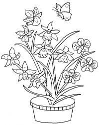plansa de colorat flori orhidee de colorat p06