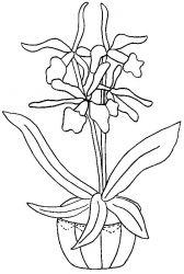 plansa de colorat flori orhidee de colorat p08