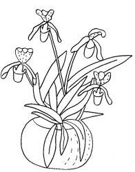 plansa de colorat flori orhidee de colorat p09