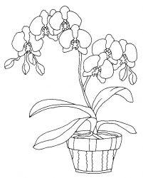 plansa de colorat flori orhidee de colorat p10