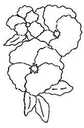plansa de colorat flori panselute de colorat p07
