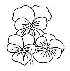 plansa de colorat flori panselute de colorat p10