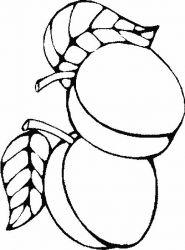 plansa de colorat fructe caise de colorat p02