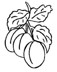 plansa de colorat fructe caise de colorat p06