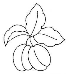 plansa de colorat fructe caise de colorat p07