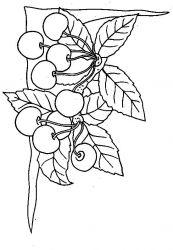 plansa de colorat fructe cirese de colorat p05