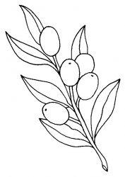plansa de colorat fructe de colorat p20