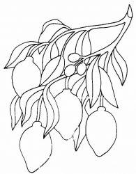 plansa de colorat fructe lamaie de colorat p04