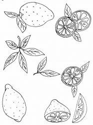 plansa de colorat fructe lamaie de colorat p06