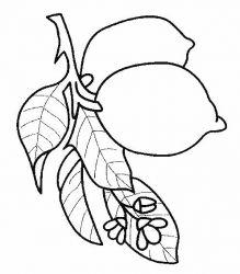 plansa de colorat fructe lamaie de colorat p09