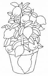 plansa de colorat fructe lamaie de colorat p13