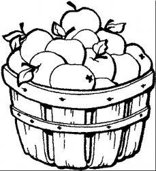 plansa de colorat fructe mere de colorat p09