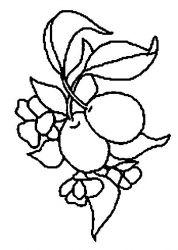 plansa de colorat fructe prune de colorat p02