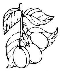 plansa de colorat fructe prune de colorat p04