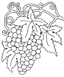 plansa de colorat fructe struguri de colorat p02