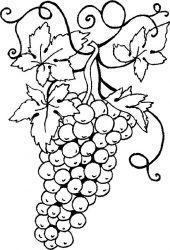 plansa de colorat fructe struguri de colorat p04