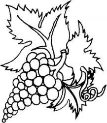 plansa de colorat fructe struguri de colorat p05