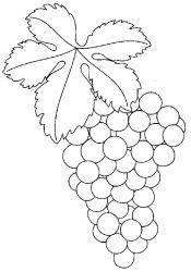 plansa de colorat fructe struguri de colorat p06