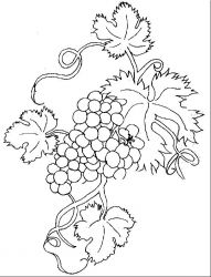 plansa de colorat fructe struguri de colorat p09