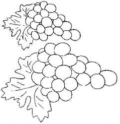 plansa de colorat fructe struguri de colorat p12