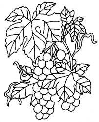 plansa de colorat fructe struguri de colorat p13